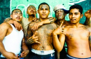 MS-13 Undocumented Minors